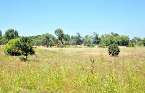 Yalova'da Arboretum tepkisi