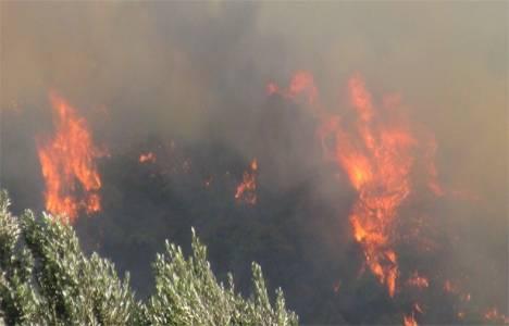 Isparta'da milli parkta orman yangını çıktı!