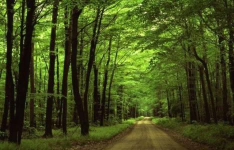 Ormanlar kaça