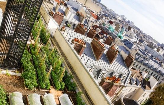 Paris çatılarında