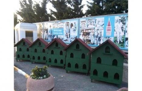 Beyoğlu Belediyesi'nden kedilere