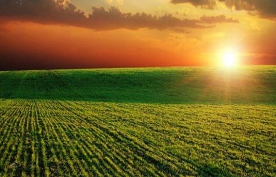 Sudan'da kiralanan araziler ne olacak?