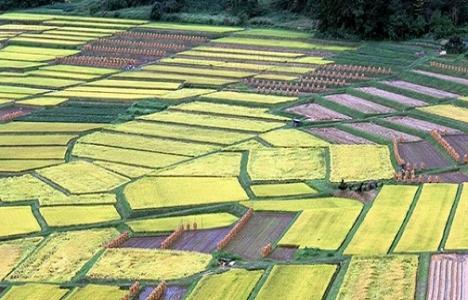 Tarım arazileri hızla