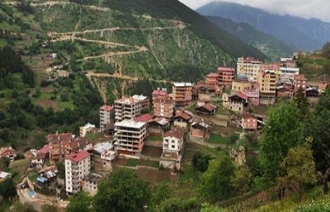 Trabzon Karaçam ve