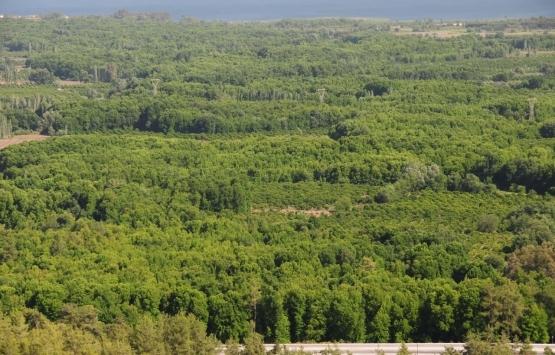 Muğla Sığla Ormanları koruma alanı olarak tescillendi!