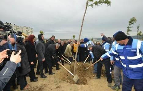 İzmir'e 582 bin ağaç dikilecek!