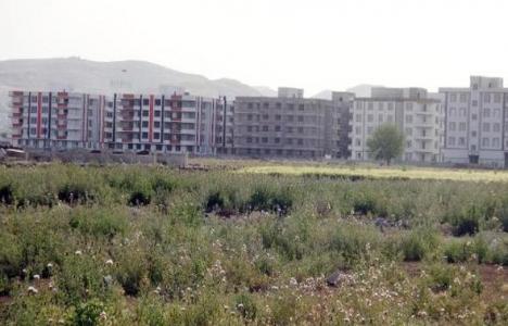 Harran Ovası betonlaşıyor!