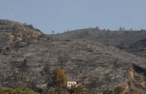 Milas'ta 600 hektar orman kül oldu!