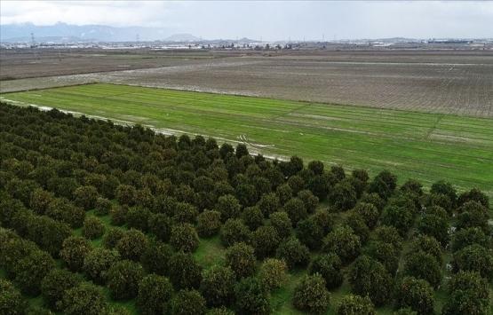 Tarıma dayalı yatırım projelerinde süre 1 Ağustos'a uzatıldı!