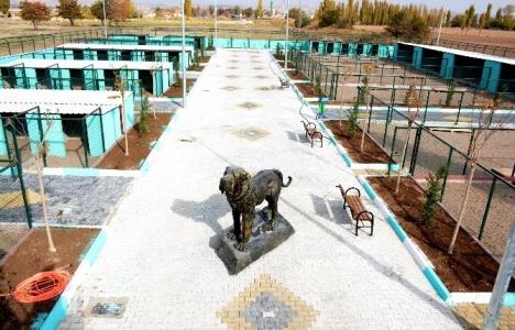 Aksaray'da Hayvan Rehabilitasyon