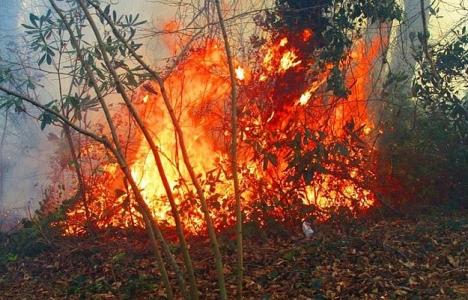 Bafra'da mera yangını!