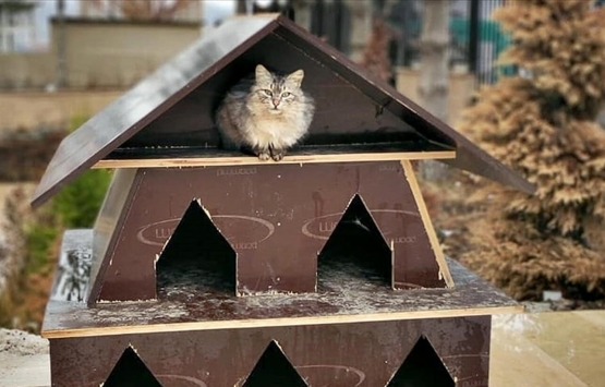 TOKİ inşaatların atık malzemelerinden sokak hayvanlarına yuva yapıyor!