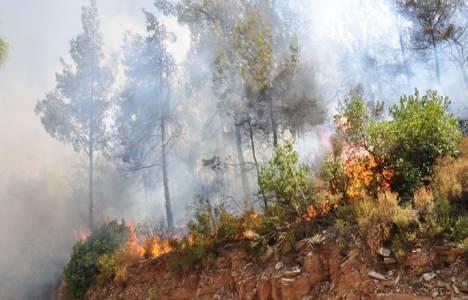 Muğla Milas'ta orman yangını çıktı!