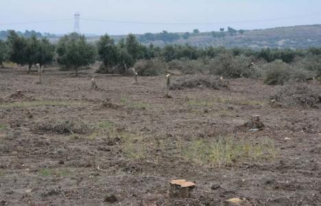 Tarım arazileri nasıl