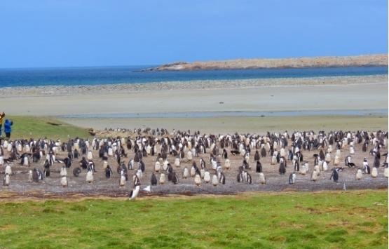 Sahibinden satılık Falkland