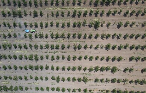 11 milyon metrekare Hazine arazisi ağaçlandırma için kiraya verildi!