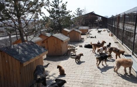 Bursa'da tüm ilçelere hayvan barınağı kurulacak!