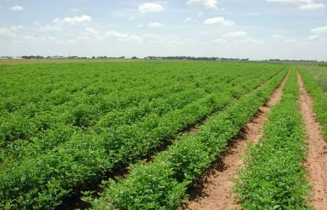 Toplam organik tarım
