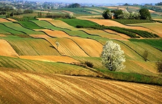 Tarım arazisinde önalım