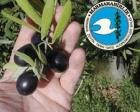 Marmara Birlik Tarım Satış Kooperatifi bina yaptıracak!
