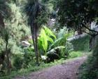 Ataşehir'e İstanbul'daki en büyük botanik park kurulacak