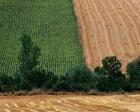 Milli Emlak, Hatay'da 49 yıllığına tarla ve arazi kiralıyor!
