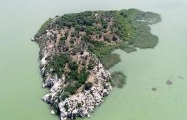 Bursa Uluabat Gölü'ndeki