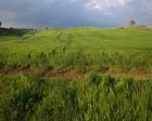 maliye bakanlığı kiralık arazi