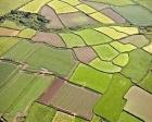 Miras kalan tarım arazilerinin bölünmesi!