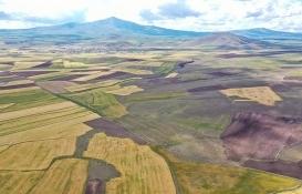 Hisseli arazi başkalarına kiralanabilir mi?