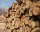 Orman ürünlerinde hedef 25 milyar dolar!