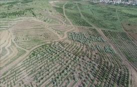 Tarım ve Orman Bakanlığı'ndan Atatürk Orman Çiftliği açıklaması!
