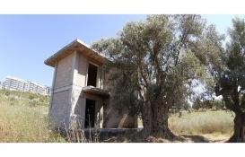 Aydın'da anıt ağaç tescil başvurusu bulunan ağacın yanına inşa edilen villaya tepki!