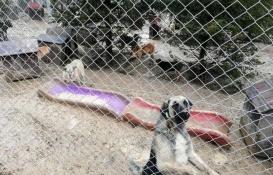 Ankara'daki köpek barınağı