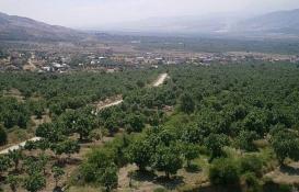 Aydın Buharkent'te 3.5 milyon TL'ye satılık arsa!