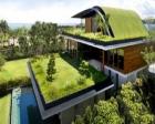 Yeşil çatılar inşaat sektörünün yeni trendleri arasında!