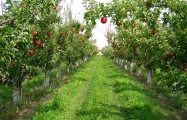 Türkiye'ye örnek model Kabalı Meyve Bahçesi!