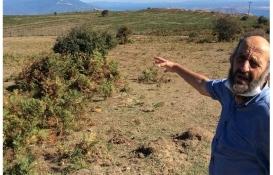 Marmara Adası sakinleri mera alanlarının kiralanmasına isyan etti!
