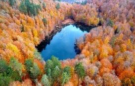 Türkiye'de 3,2 milyon hektar alana