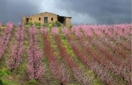 İtalya'da bir kasaba daha 1 euroya ev satıyor!